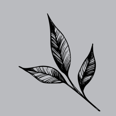 Black and White Leaf
