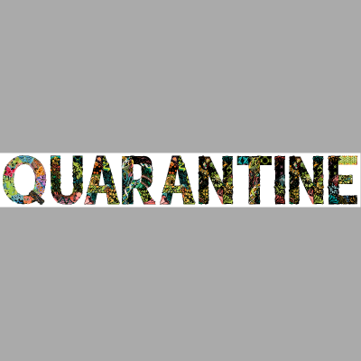 Hippie Quarantaine